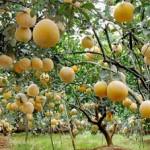 Các loại cây có giá trị kinh tế cao