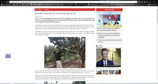 Bưởi Diễn Thành Đạt được các báo phỏng vấn về bưởi diễn chính gốc